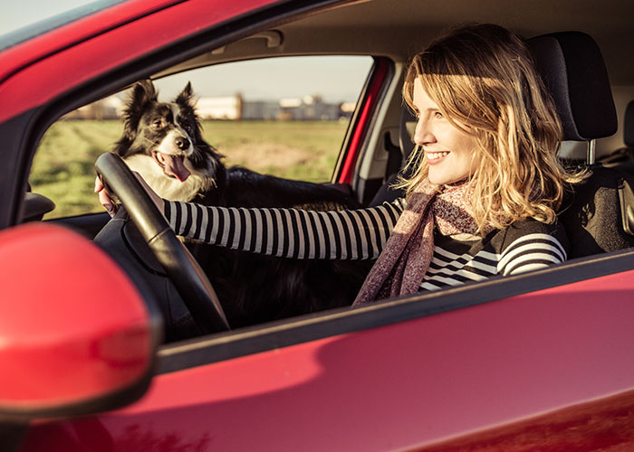 Unsafe Habits While Driving With Your Dog